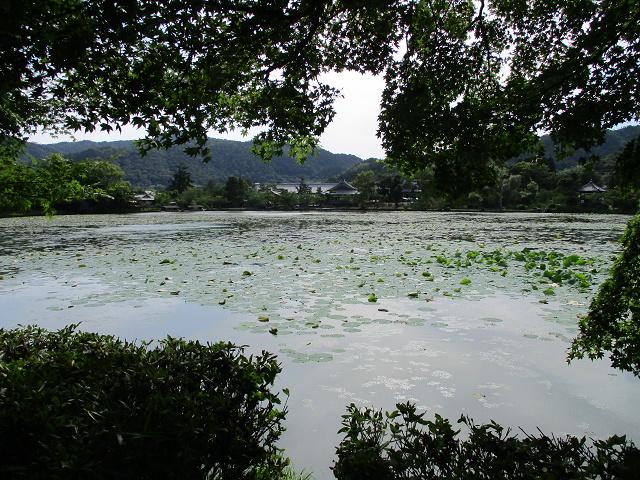 嵐山ウォーキング~パート2~