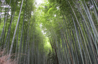 嵐山ウォーキング~パート1~