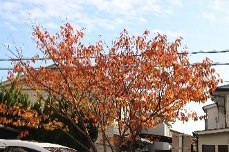 コロナ禍の秋~樹々の彩り~